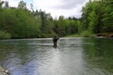 spey casting the cowichan river-34600633442616847829..jpg