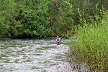 Roll casting a high spring stream